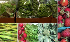 Willow Grove Market--Locally Grown!